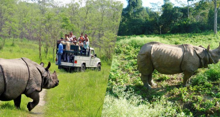 One horned Rhino is a gem in Chitwan National Park 93