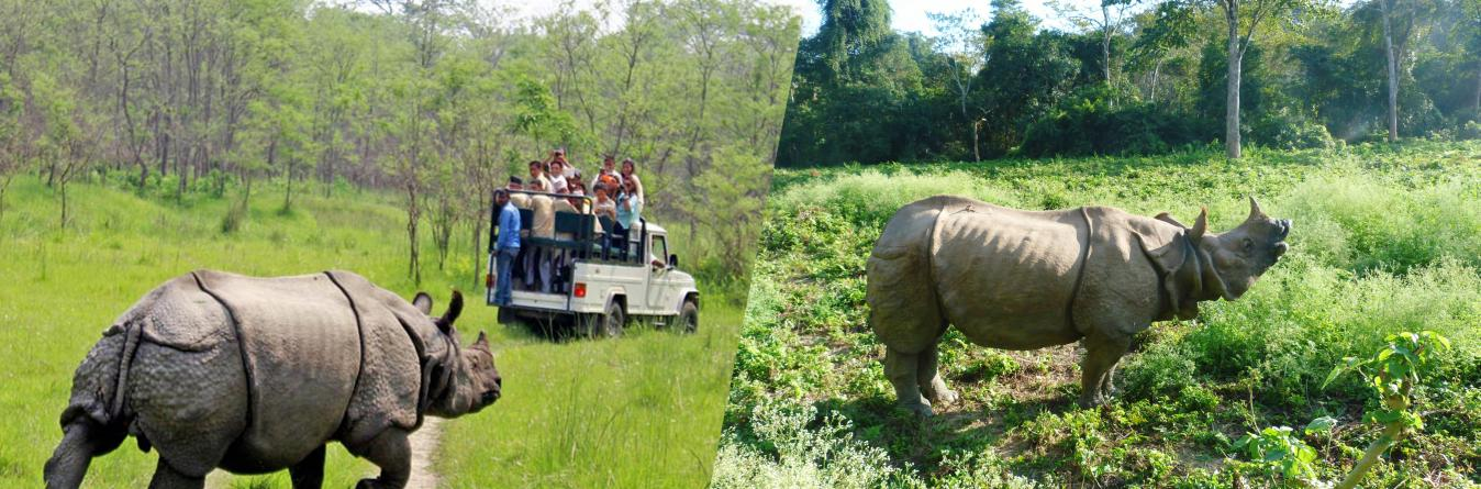 One horned Rhino is a gem in Chitwan National Park